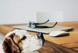 Beratung für Hund und Halter