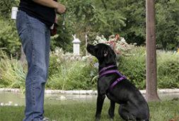 Hundetraining unter vier Augen