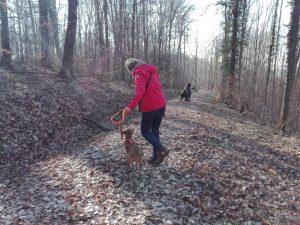 Erziehungsspaziergang_Hundeschule_Nouvidog_Colmar