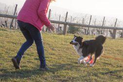 Apportieren eine tolle Beschäftigung für Hunde