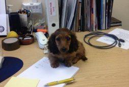 Beratung für Hundebesitzer und solche die er werden wollen