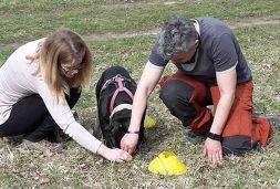 Hund wird in einer Einzelstunde unterrichtet