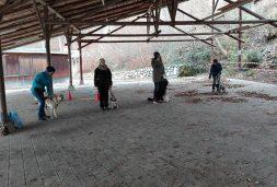 Erziehung und Grundausbildung zum alltagstauglichen Hund