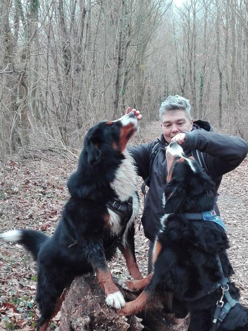Hundetrainerin Yvonne Haller mit zwei Berner Sennenhunden