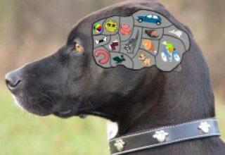 Im Gehirn eines Hundes