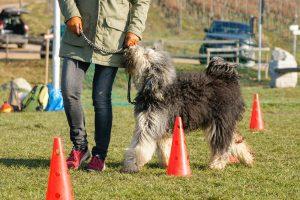 hund-uebt-leinenfuehrigkeit
