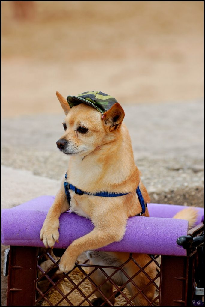 Neugieriger Hund schaut aus Korb