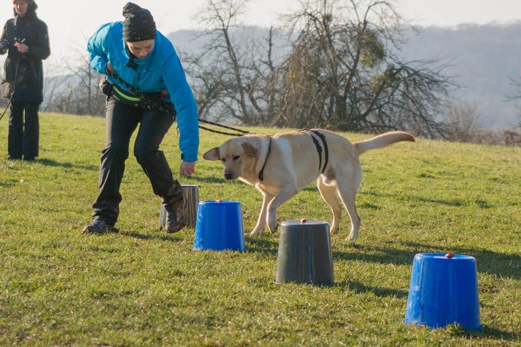 Grunderziehung für Hunde in der abc Gruppe bei der Hundeschule Nouvidog