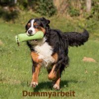 hund_apportiert_einen_dummy