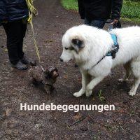 hundebegegnungen_meistern