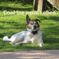 hundegruppe_fuer_tierschutzhunde_angsthunde