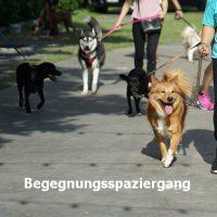 begegnungsspaziergang_hunde